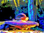 mushroom 4