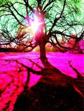 sunburst 8
