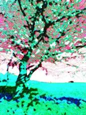 badbury blackthorn 5