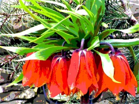 Giant Fritillaria 2