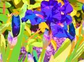 van gog iris 1