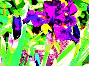 van gogh iris 6