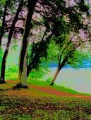 buscot lake 1