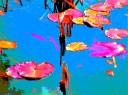 buscot lilies 7