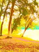 summer buscot 1d