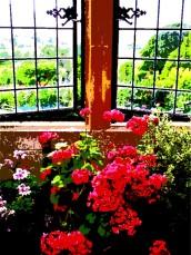 geranium windows