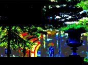 nocturnal buscot