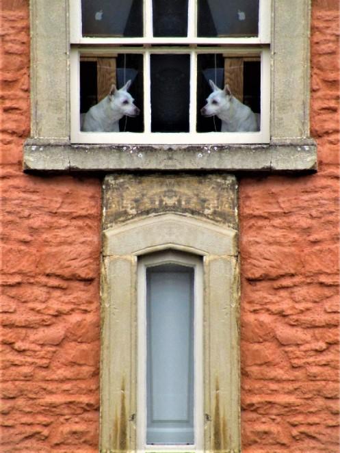 twins doggies