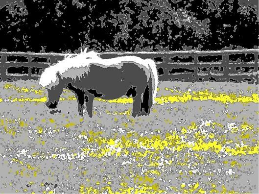 2 horse oxleaze