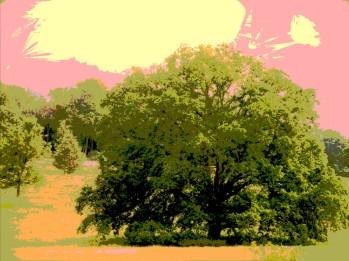 hearts of oak 2