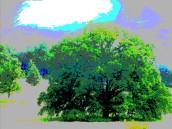 hearts of oak 3