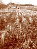 juillac harvest 1