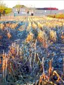 juillac harvest 3