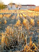 juillac harvest 4