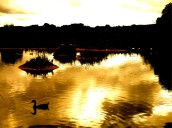 on golden pond 1