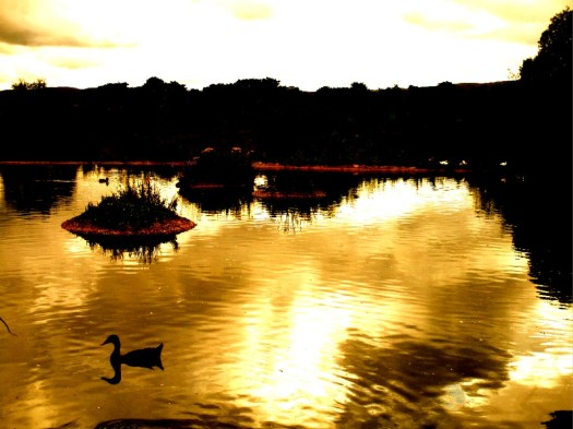 on golden pond 1