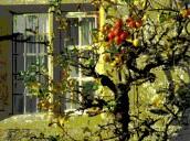 apples at window 3