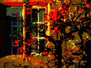 apples at window at dusk