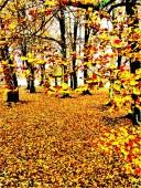 sandhurst yellow
