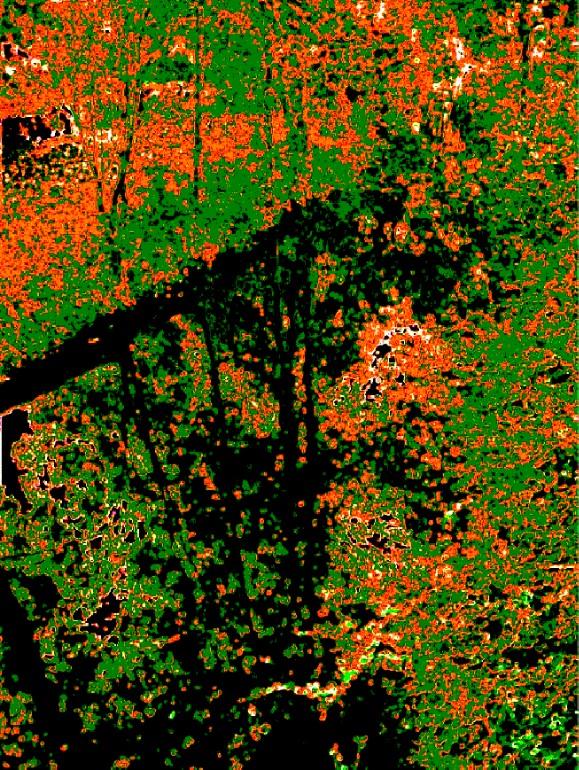 Klimt Riverbank 2