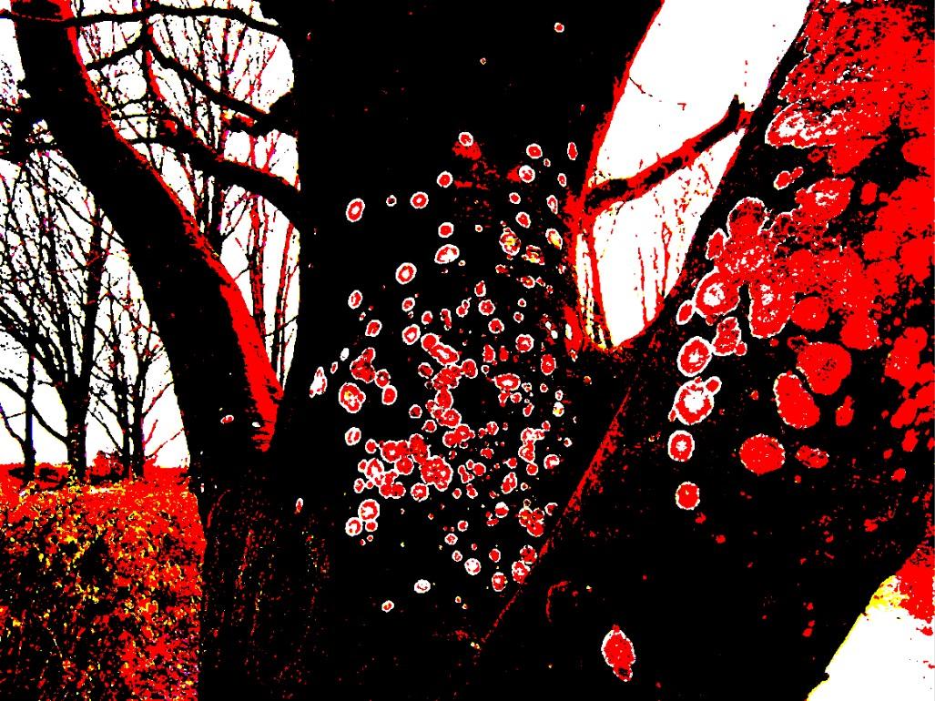 lichen trees 1