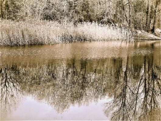 bronze pond