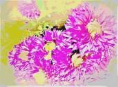 chrysanths 1