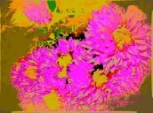 chrysanths 5