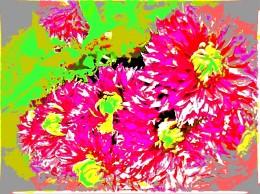 chrysanths 6