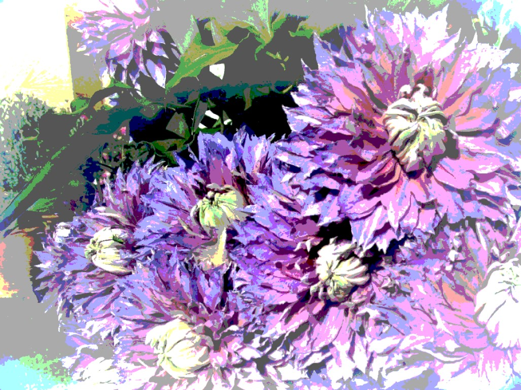 chrysanths bunch 3